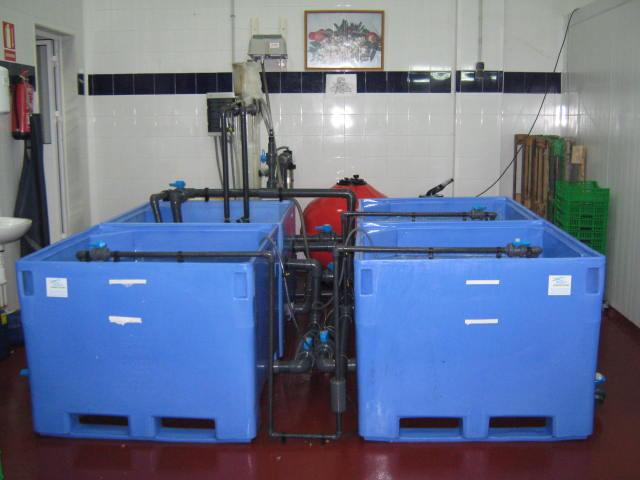 Depuradoras de Marisco y Moluscos